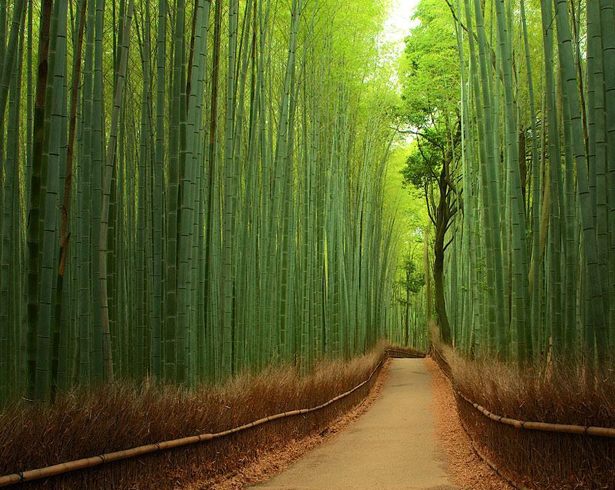 bosques de bambu japon