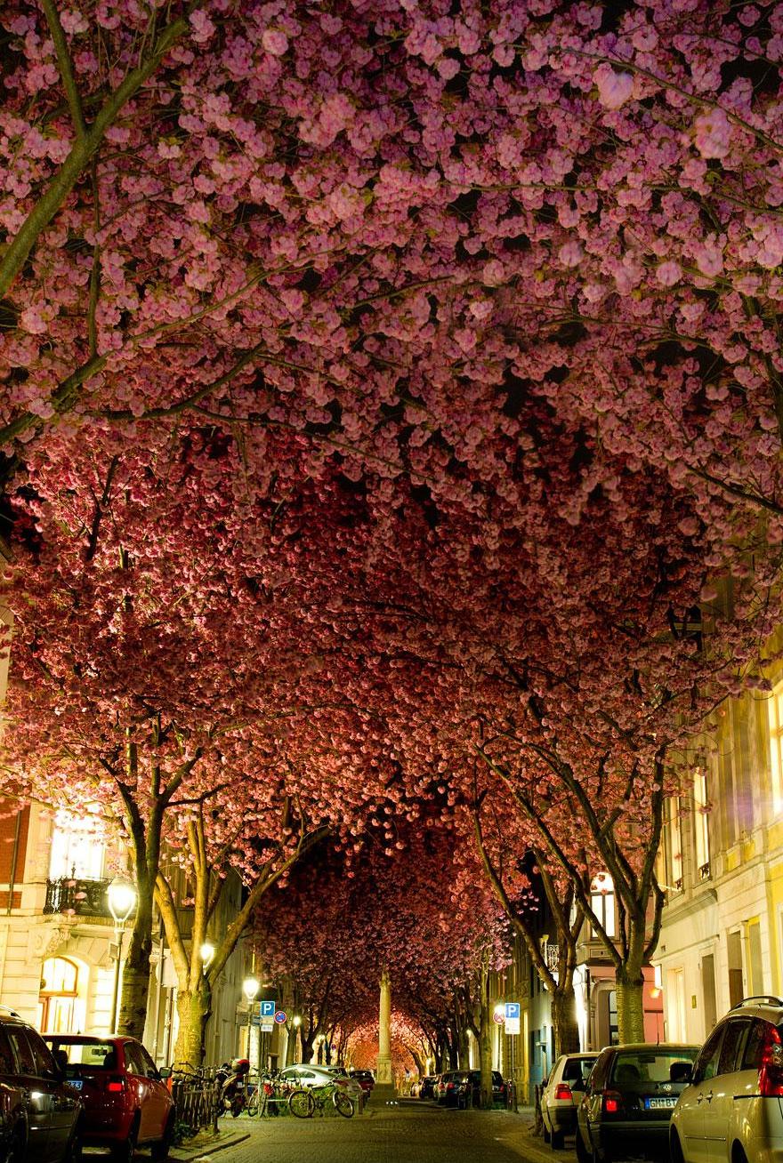 calle en Bonn alemania