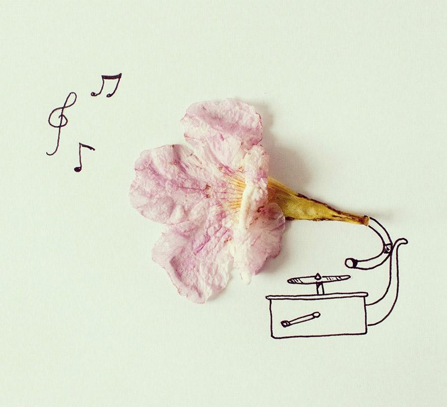 gramofona flor