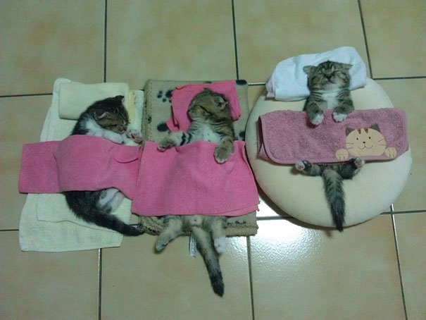 3 gatos durmiendo
