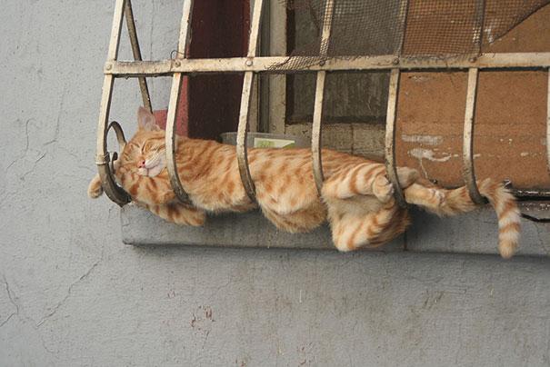 divertidos gatos durmiendo 4