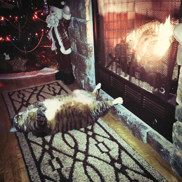 divertidos gatos durmiendo en la chimenea