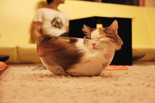 divertidos gatos durmiendo en lugares divertidisimo