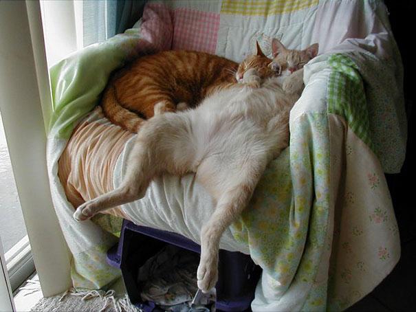 divertidos gatos durmiendo en pareja