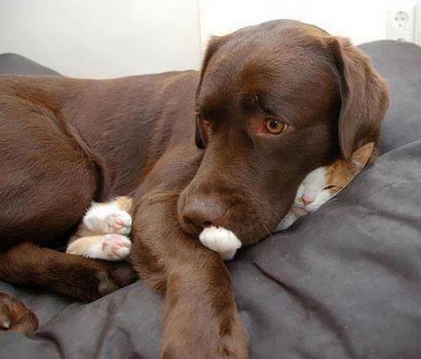 gato sin miedo