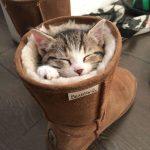 Divertidos Gatos Durmiendo en Lugares Extraños