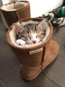 gatos durmiendo en botas calentitas