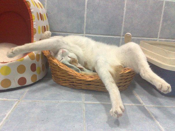 gatos durmiendo en lugares a sus anchas