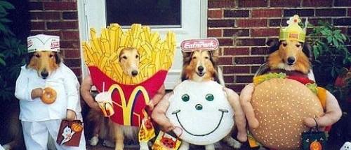Equipo canino de grasa saturada