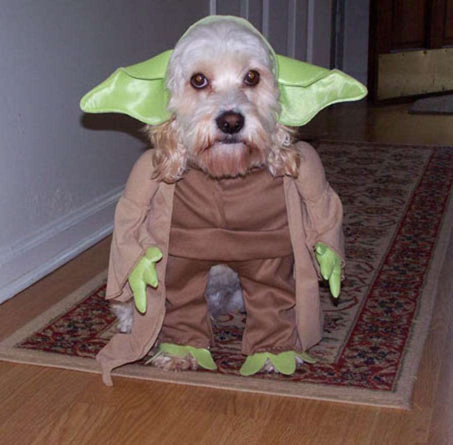 La fuerza del Maestro Yoda