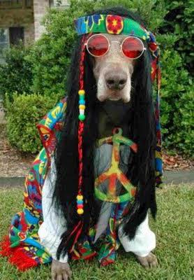 La vida hippie es la mejor