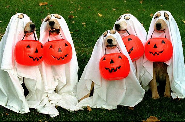 Manada de Labradores fantasma