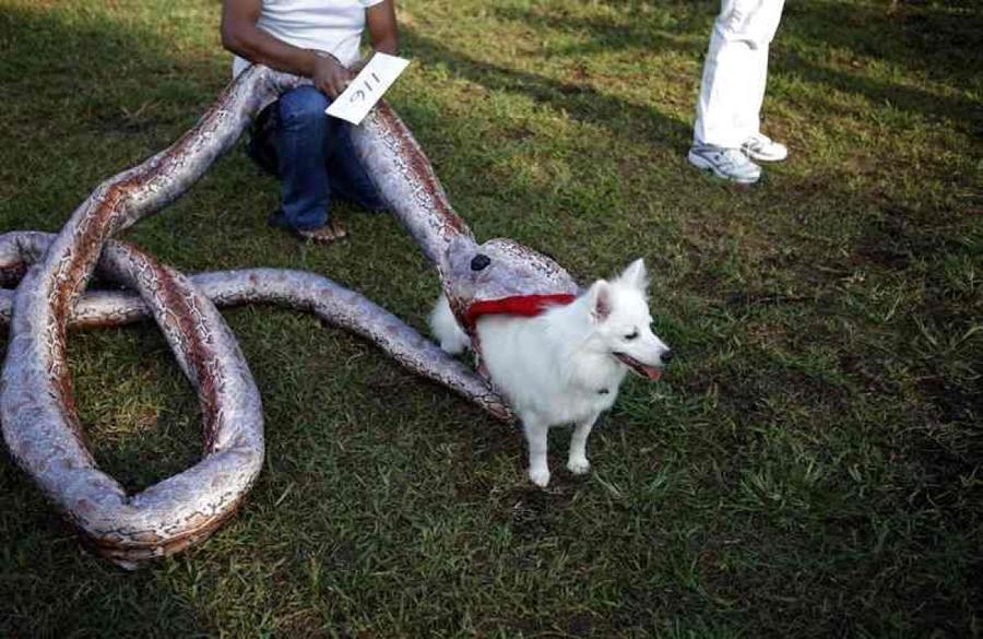 disfraces-caseros-para-mascotas-halloween-presa-de-serpiente
