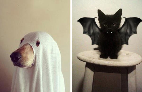Mascotas que No quieren repetir el Día de Halloween