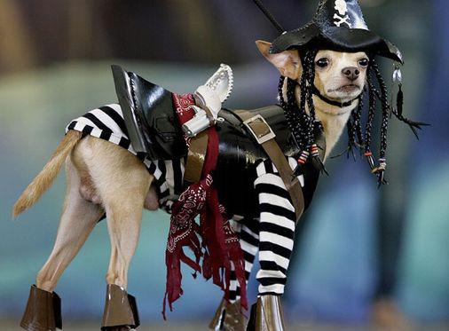 el perro pirata