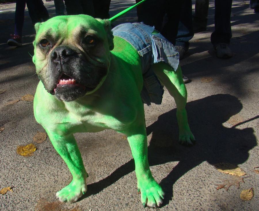 hulk el perro verde