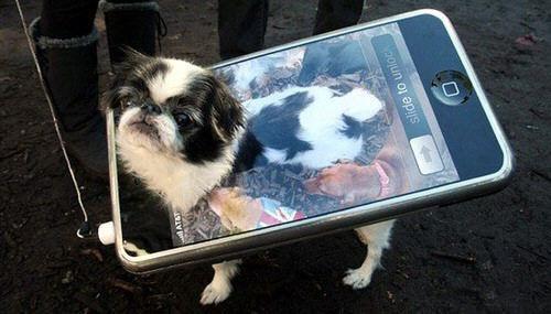 iDog, el perro iphone