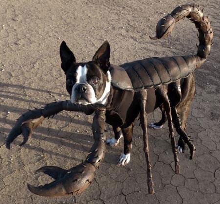 langosta perro