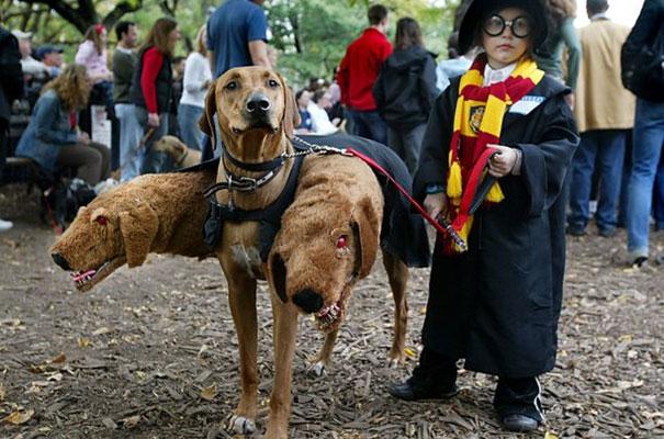 mago con perro de 3 cabezas