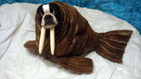 perrito foca