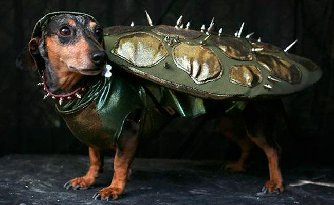 perro cucaracha