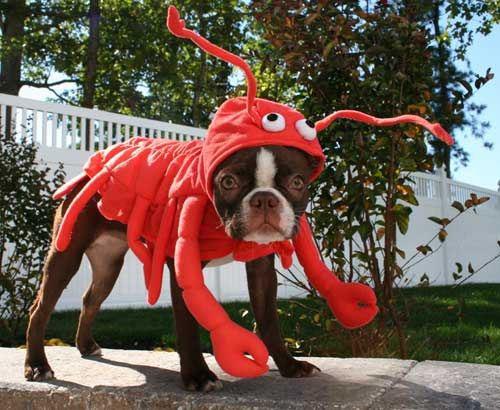 traje de perro langosta