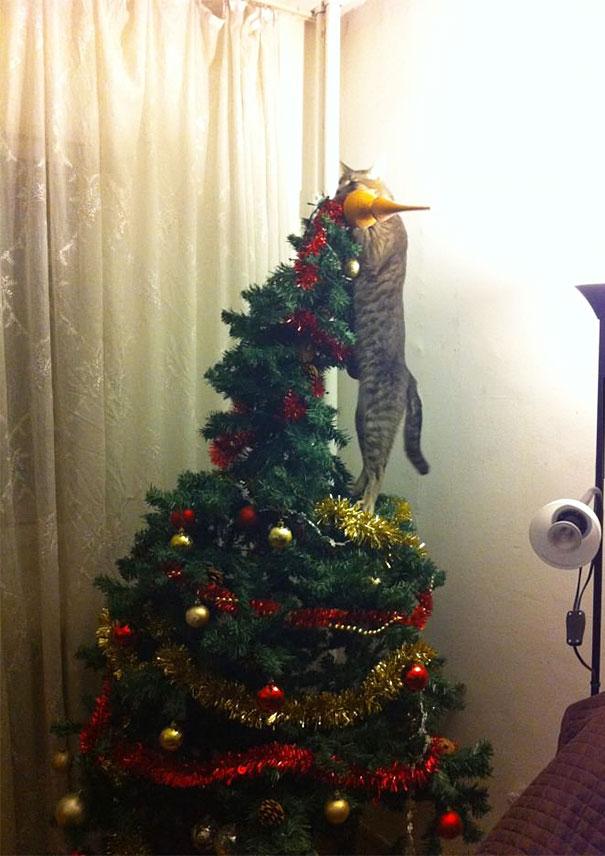 Gato estrella de navidad
