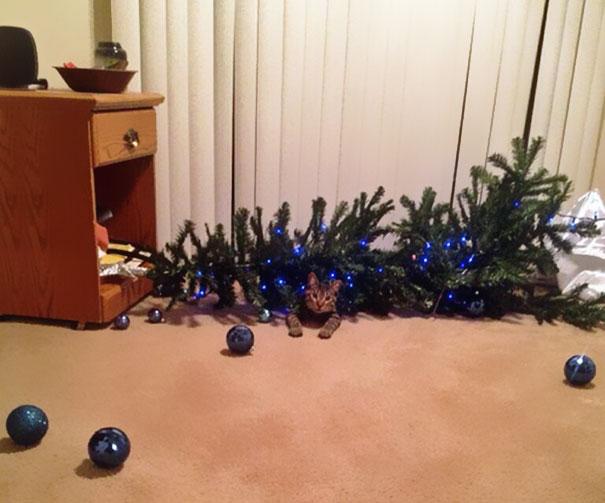 He sido yo gato navidad