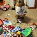 Perros y Gatos a los que les importa una mier… el espíritu navideño