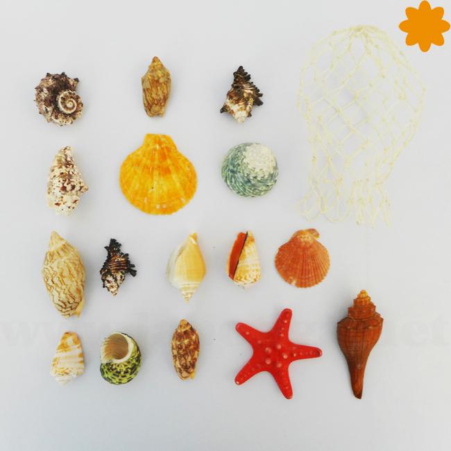 Conjunto de conchas y caracoles de colores